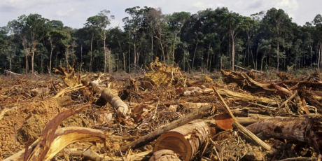 http://avaaz_images.s3.amazonaws.com/1359_Deforestation-Amazon-1024x667_1_460x230.png